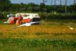 110929 白鷺と稲刈りするコンバイン.jpg