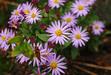111028 壺瓶山の花.jpg