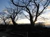 111219 サクラの木 冬.jpg