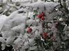 120123 木の枝に積もる雪.jpg
