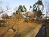 120224 シャトー尾高(旧米子ハイツ) 大山側の梅園.jpg