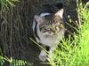 120428 側溝の猫.jpg