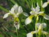 120518 白い花とハチ.jpg