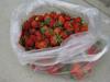 120519 ビニール袋いっぱいの苺 .jpg