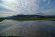 120611 朝の田園.jpg