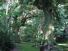 120710木々の生い茂る日吉神社境内.jpg