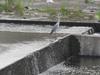 120720 川辺の蒼鷺.jpg