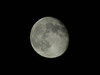 120804 今日の月.jpg