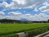 120816 正午の大山と緑の水田.jpg