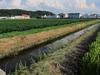 120818 農業用水路と壷瓶山と大きな雲.jpg