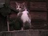120823 日没前の猫.jpg