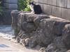 121015 猫のひなたぼっこ.jpg