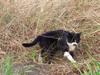 121027 どこからか来た猫.jpg
