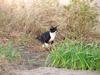121027 凛々しげな白黒猫.jpg
