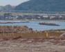 121106 海岸のわんこ.jpg