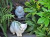 121115 白い子猫二匹.jpg