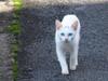 121117 白い子猫.jpg