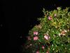 121219 雪降る夜の花.jpg