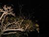 121219 冬の藤の木.jpg