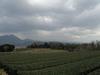 130202 大山は雲の中.jpg