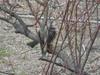 130218 梅の木の野鳥.jpg