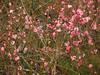 130227 開花の進む旧米子ハイツの梅園.jpg