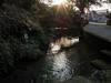 130306 天の真名井 横の泉.jpg