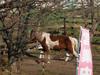 130318 トムソーヤ牧場の馬.jpg