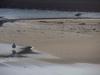 130323 海辺の鳥2匹.jpg