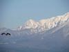 130411 大山とトンビ.jpg