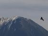 130418 大山山頂とトンビ.jpg