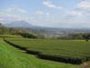 130420 大山と茶畑.jpg