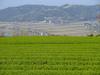 130425 茶畑と妻木晩田遺跡.jpg