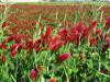 130506 真っ赤な花咲く農地.jpg
