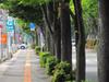130525 431号の歩道と並木jpg
