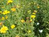 130628 花と蝶.jpg