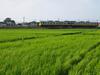 130807 田園を走る特急列車.jpg