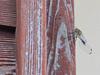 130907 壁のトンボ.jpg