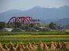 130919 赤い橋と乾燥中の藁.jpg