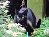 131026 近所の黒猫.jpg