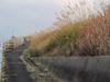131207 ススキの道.jpg