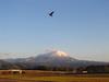 131212 大山の冠雪.jpg