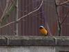 140203 はたけの野鳥.jpg