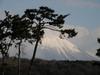 140221 松と大山.jpg