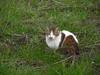 140311 公民館前の猫.jpg