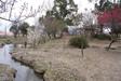 140314 旧米子ハイツの梅園 その2.jpg