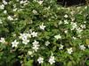 140410 野いちごの花.jpg