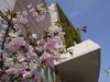 140411 イオンの桜.jpg