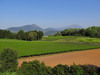 140502 茶畑と大山.jpg