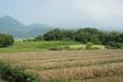 140701 刈り取り済みの茶畑.jpg